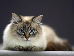 Маскарадные котята