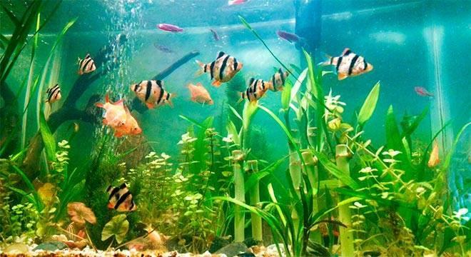 Как завести аквариум с чего начать