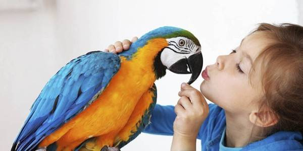 Попугай дома