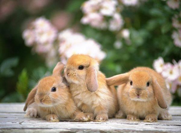 Развитие крольчат по дням