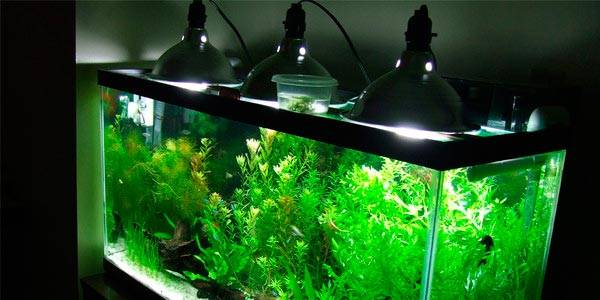 Aquarium-Lighting-600x300