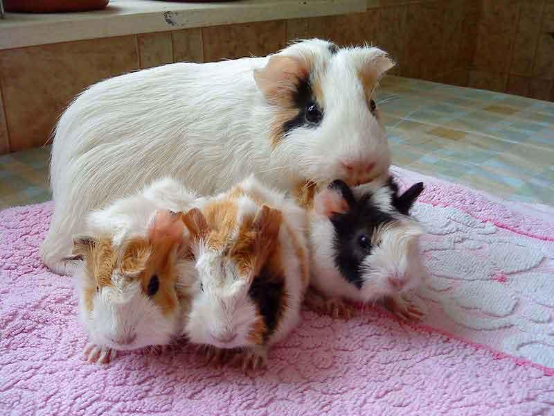 Милые домашние животные фото за которыми легко ухаживать