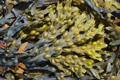 Диатомовые водоросли в аквариуме как бороться