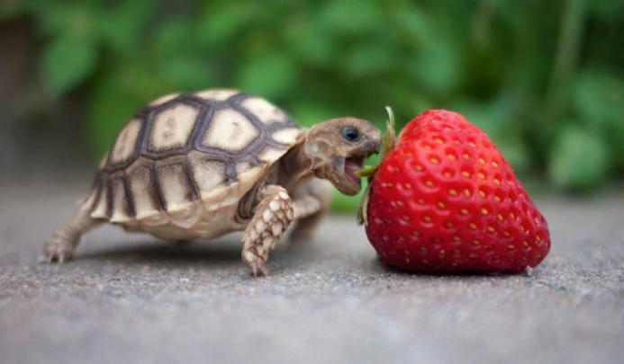 возраст черепах