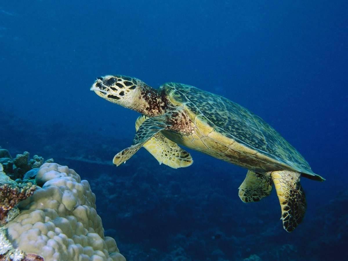 Морские черепахи - всеядные существа.