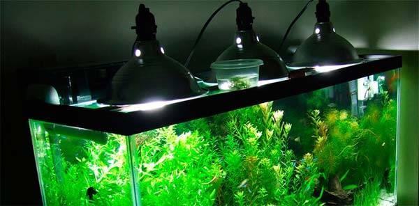 Сколько нужно света для аквариума