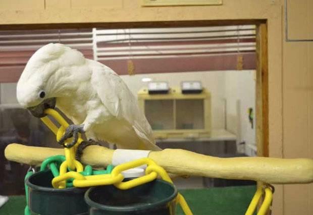 Птица какаду