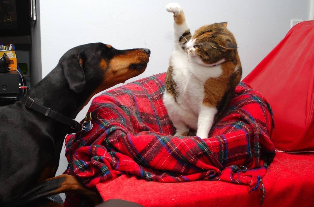 Мая цветной, картинки собак с кошками приколы