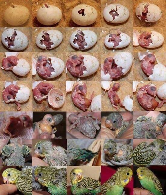 Попугаи уход и содержание в домашних условиях
