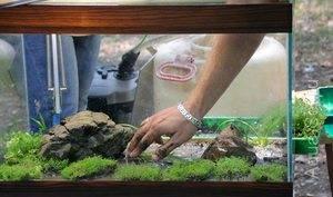 Лучший грунт для аквариума