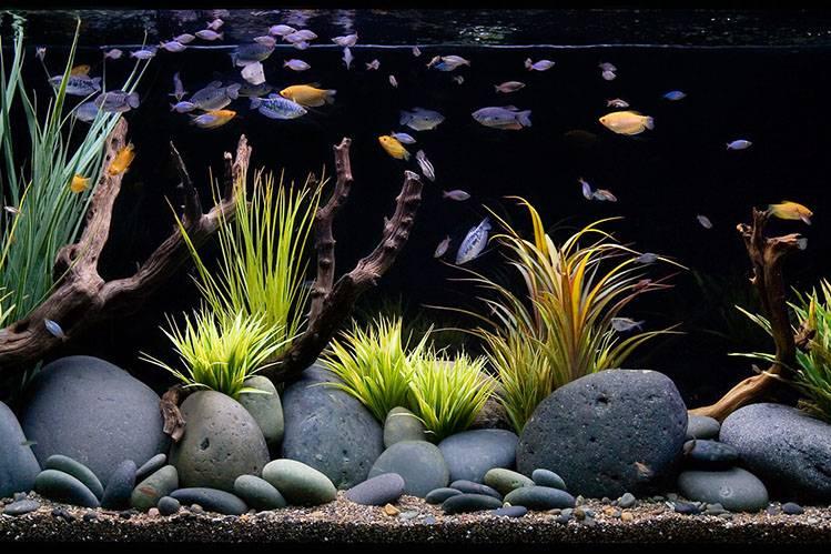 Цветной грунт для аквариума