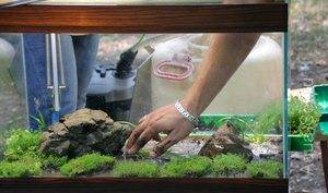 Питательный грунт для аквариумных растений своими руками