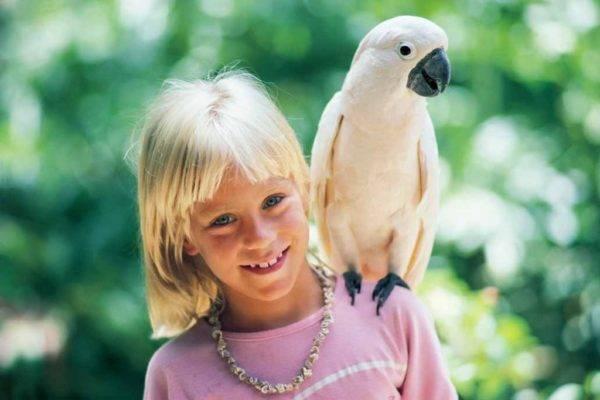 Попугай какаду белый