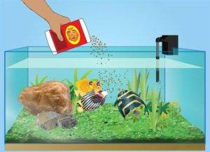 Сколько можно не кормить аквариумных рыбок