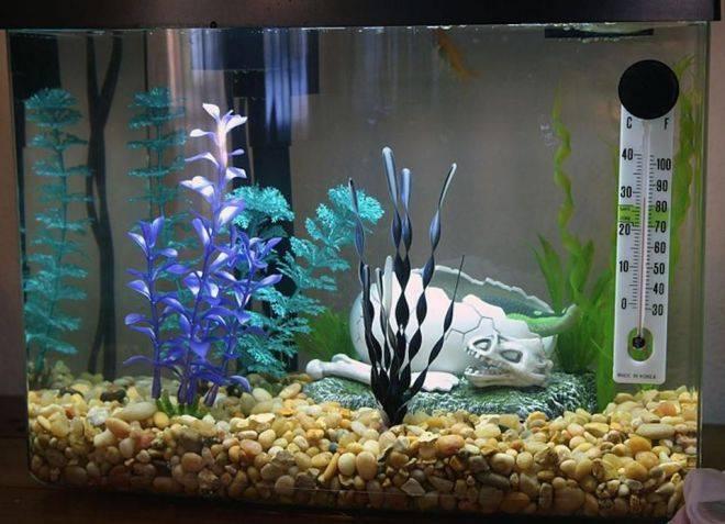 Грунт для аквариума какой лучше для растений