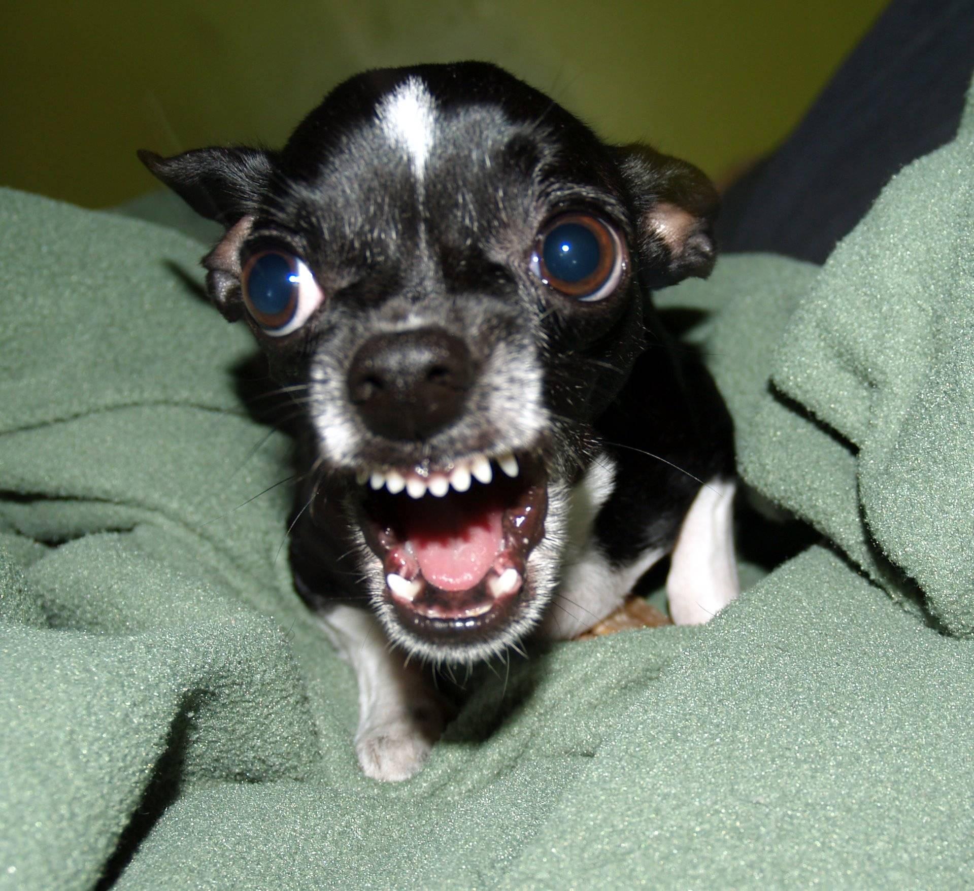 Юбилей школы, смешная картинка злая собака