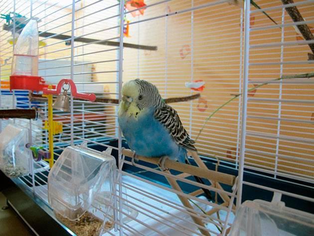 Вольер для попугая