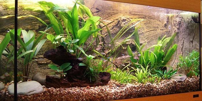 Цветущие аквариумные растения