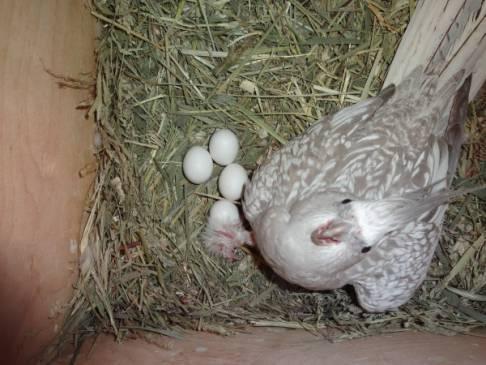 Попугай корелла как ухаживать