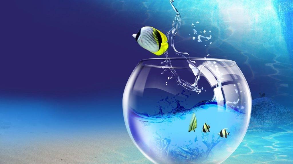 Какая вода должна быть в аквариуме