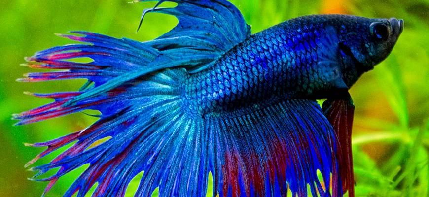 Воздух для рыбок в аквариуме