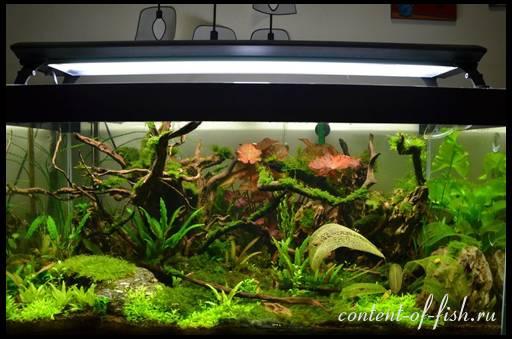 Как размножаются креветки в аквариуме