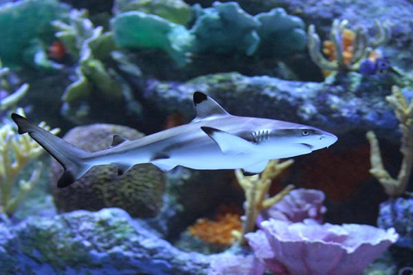 Декоративные рыбки