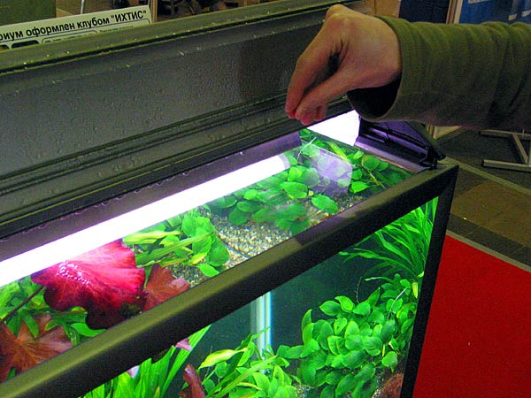 Как часто нужно кормить рыбок в аквариуме