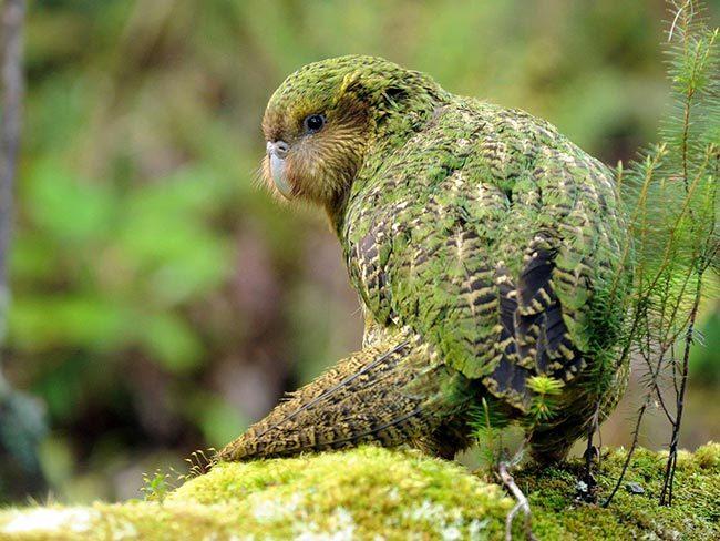 Сколько лет живут попугаи