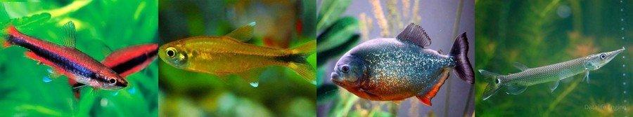 Аквариумные рыбки разновидности